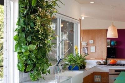 Trang trí nội thất phòng bếp với những chậu cây xanh mát mẻ