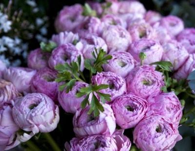 Những loài hoa không chỉ đẹp mà còn mang vận may cho ngôi nhà
