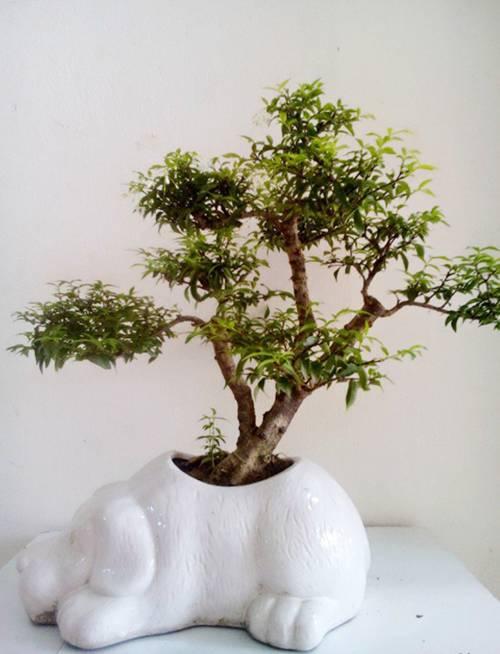Top 5 loại cây cảnh để bàn vừa đẹp vừa mang lại tài lộc vào nhà